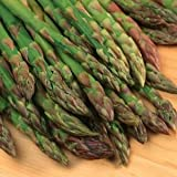Jersey Giant Asparagus Plants Crowns Roots Bare Root 25 Ea