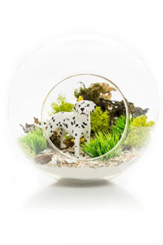 [Dalmatian Gift | Terrarium Kit | Dalmatian Lovers Terrarium Design Kit | Dog Breed Series | Complete DIY Gift Set | 6