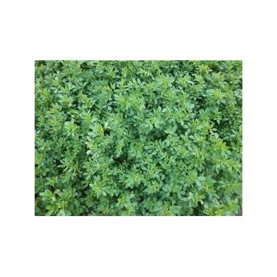 Alfalfa Seed 5lb Bag (COATED) : Garden & Outdoor