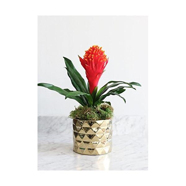 Artificial Hawaiian Tropical Bromeliad Flower in Flame – 15″