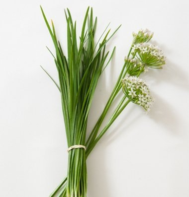 David's Garden Seeds Herb Chives Garlic D925A (White) 1000 Organic Seeds