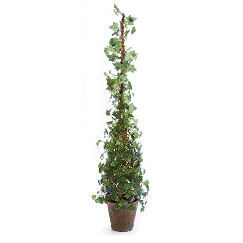 - Napa Home & Garden Ivy 62
