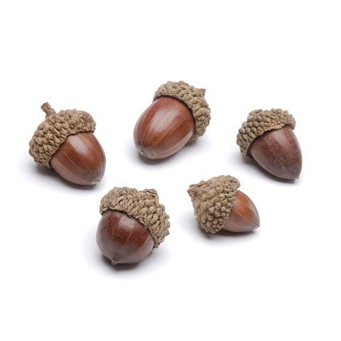 Darice Autumn Fall Decor - Bag of Small Faux Acorns 4oz/120g