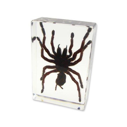 (Tarantula Deskdecoration(5 1/2x 3 3/4 x1 1/2