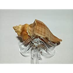 Rare item Nice glass blowing Hermit crab natural seashell (Conch) : (Copter shop)