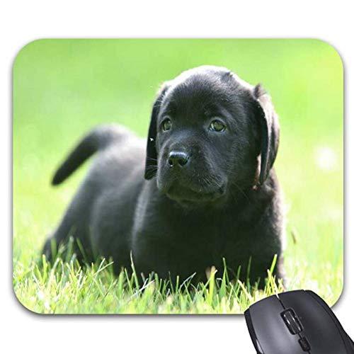 Black Labrador Retriever Dog Black Puppies Mouse Pads - Stylish Office Accessories (9.84 x -