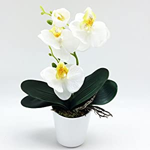 PEPPERLONELY Brand 11″ H Artificial Ceramic Potted Plant Orchid, White
