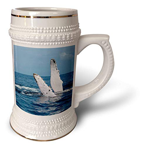 3dRose Danita Delimont - Whales - A humpback whale floats on its back, Silver Bank, Dominican Republic - 22oz Stein Mug (stn_312990_1)