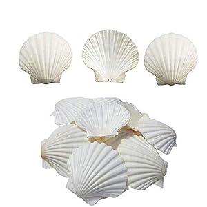 41Ss2Qqx0pL._SS300_ Best Seashell Wedding Decorations