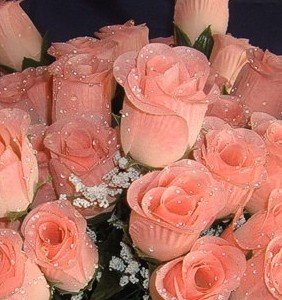 Amazon igc 84 peach silk rose flowers wraindrops wedding igc 84 peach silk rose flowers wraindrops wedding flowers bridalfloral mightylinksfo