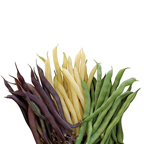 - Burpee Three Color Blend Bush Bean Seeds 2 ounces of seed