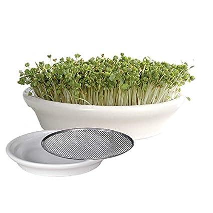 Watercress Sieve Cress Strainer Seeds Germination Sprouter 6.92inch (16cm)  White