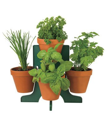 - Promo Seeds Buzzy Herb Grow Kit with Stand