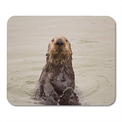 Mouse Pads Coast Animal California Sea Otter Boats Color Cute Eating Mouse Pad for notebooks, Desktop Computers mats Office Supplies