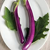 buy David's Garden Seeds Eggplant Machiaw NR5241 (Purple) 25 Non-GMO, Hybrid Seeds now, new 2019-2018 bestseller, review and Photo, best price $7.95