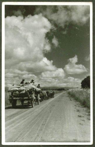 Bullock cart harvest time near Johannesburg South Africa RPPC 1930s