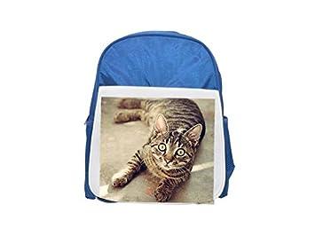 gato, animal, lindo, mascota, feline, mochila azul estampada Kitty niños,