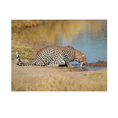 African Waterhole Camera - 8