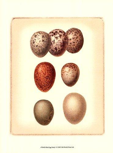 Bird Egg Study I by Vision Studio - 9.5x13 Inches - Art Print - Study Studio Egg Bird Vision