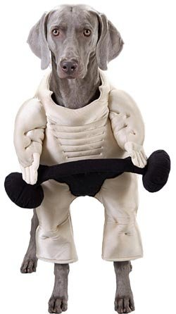 Pet Muscle Dog Halloween Costume (Size Large)