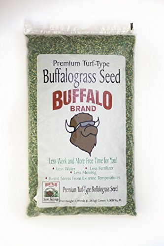 Sharp's Improved II Buffalograss by Sharp Bros. Seed Company