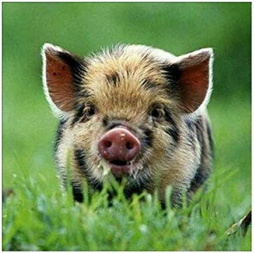 5D Mini Fluffy Pig Diamond Painting by Numbers Cross Stitch Decor Arts Crafts