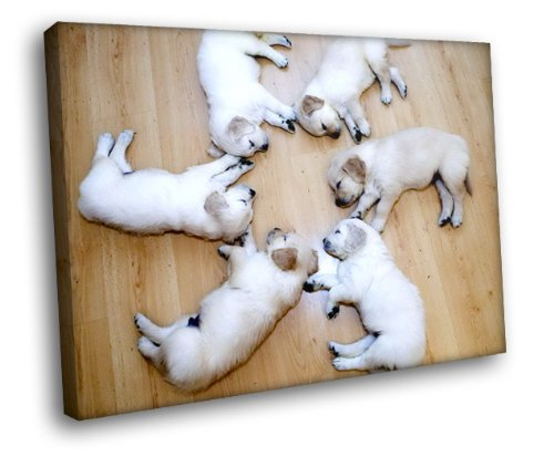 HD3123 White Sleeping Labrador Retriever Puppies 16x12 FRAMED CANVAS PRINT