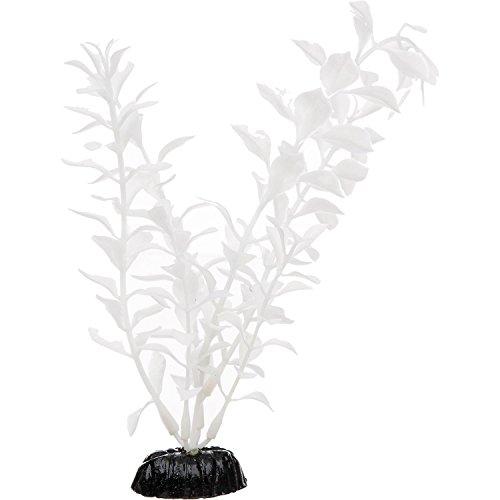 Imagitarium White Midground Ludwigia Aquarium Plant, ()