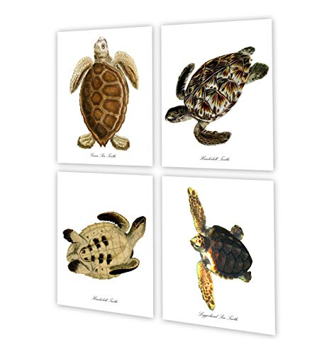 Sea Turtle Sea Life Artwork set of 4 BeachDecor Coastal Bathroom Coastal Bedroom Wall Decor