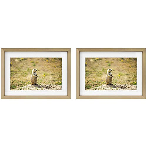 Cheap Gold Frames (Golden State Art Picture Frames - Gold Aluminum (Shiny Brushed) - Fit Photo with Ivory Mat or Without Mat - Metal Frame Real Glass (5x7, 2-Pack,)