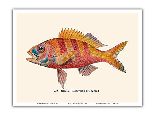 fish art prints - 5