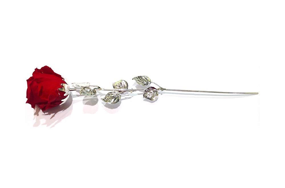 Acciaio argentato Bagutta Rosa Rossa Stabilizzata