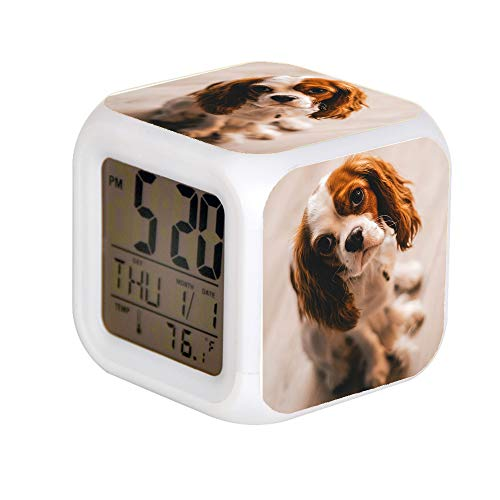 JHSIT 7 Color Change LED Digital Alarm Clock with Date Alarm Thermometer Desktop Table Cube Alarm Clock Child Home Shallow Focus Photography of a Cavalier King Charles Spaniel
