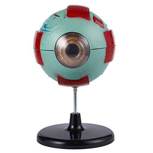 Eye Model Human Eyeball Anatomy Model For Eye Function And Science
