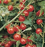 Cherry Tomato Matt's Wild D732A (Red) 25 Heirloom Seeds by David's Garden Seeds