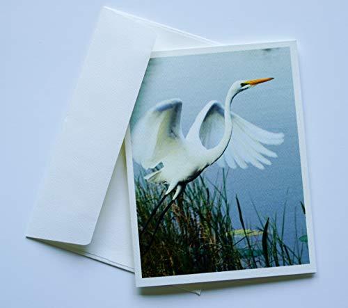(Bird Note Cards Original Elegant Photographic Textured White Blank 4.25
