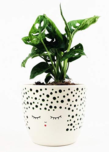 Floral Home Ceramic Face Vase in Polka Dot Forest Green - 5.25