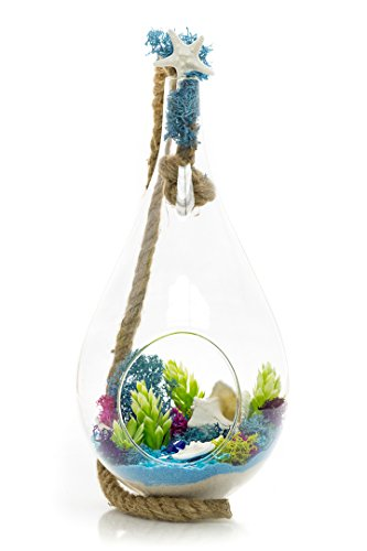 "Glass Jewels Pear (Succulent Silk Plant Terrarium Kit | Jewels of the Sea | Succulent Series | Complete DIY Gift Set | 10"" Teardrop/Pear Shaped Glass Planter with 15"
