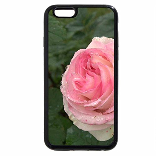 iPhone 6S / iPhone 6 Case (Black) a pink rose with some Raindrops on it