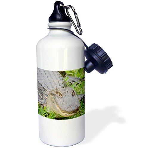 3dRose Louisiana-Barataria Preserve. Alligator. -Sports Water Bottle, 21oz (wb_210209_1)), 21 oz Multicolor
