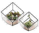 ElegantLife Succulent Terrarium, Geometric Decorative Cubic Moss Glass Leak Proof Pot Tabletop Flower Plant Box Planter Black 2 Different Size Set (No Plant Included)