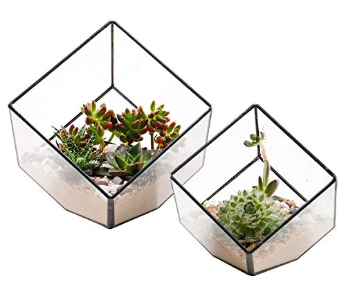 ElegantLife Succulent Terrarium, Geometric Decorative Cubic Moss Glass Leak Proof Pot Tabletop Flower Plant Box Planter Black 2 Different Size Set (No Plant Included)