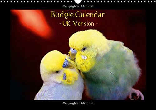 Budgie Calendar - UK Version 2016: CALVENDO presents nature photographer Bjoern Bergmann's brand-new budgerigar calendar - already the No. 1 in Germany. (Calvendo Animals) by Calvendo Verlag GmbH