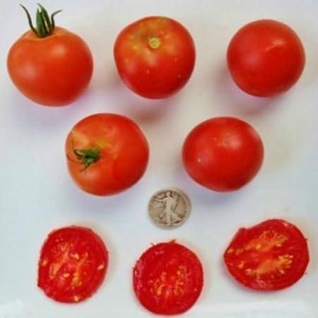 The Perfect Slicer 40 Seeds Organic Heirloom Tomato Seed Arkansas Traveler