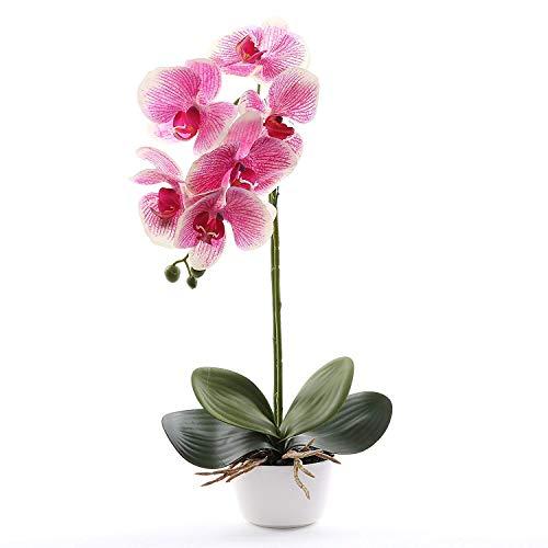 Flower Phalaenopsis Orchid (Livilan Silk Phalaenopsis Flower Arrangement, Artificial Orchid Flowers with White Vase, Wedding Party Home Centerpiece Decor (Fuchsia))