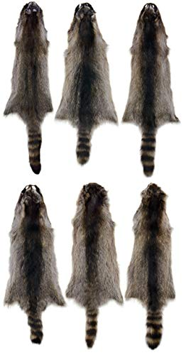 6 Pack AuSable Fur Tanned Silver Satin Raccoon Fur for sale  Delivered anywhere in USA