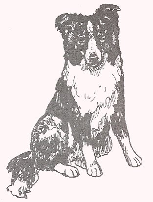 Dog Rubber Stamp - Border Collie-2E (Size: 1-1/2