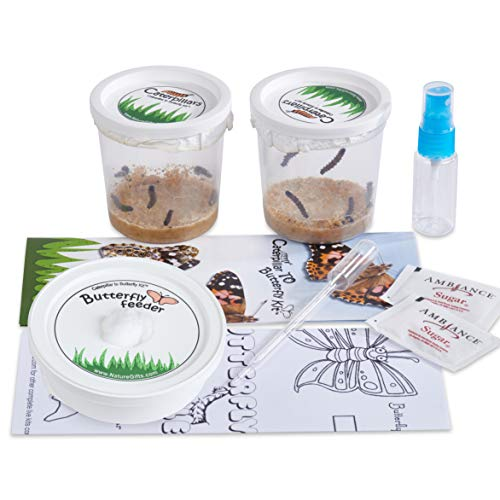 Nature Gift Store 10 Live Caterpillars Shipped Now: Butterfly Kit Refill]()