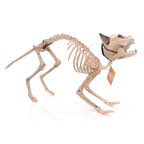 Animated Halloween Skeleton Cat with Glowing Eyes and Sounds, 18 Inch -