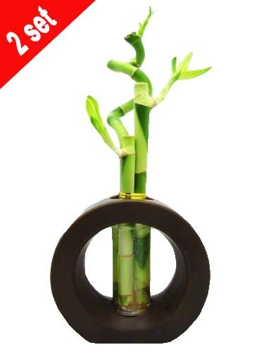 Set of 2 Live Spiral 3 Style Lucky Bamboo Plant Arrangement with Ceramic Vase Brown